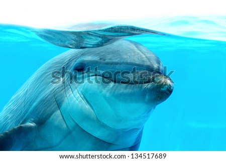 Ocean Life - Closeup of a funny dolphin watching me. - stock photo