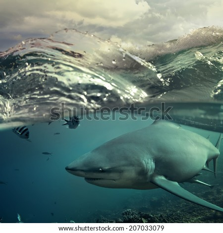 Ocean open water. Wild hungry shark hunting close sea surface - stock photo