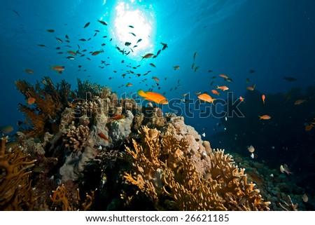 ocean,sun and fish - stock photo