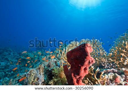 ocean, sun and fish - stock photo