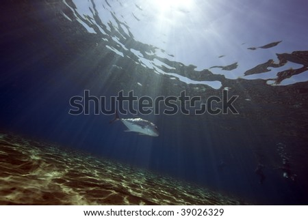 ocean, sun and giant trevally