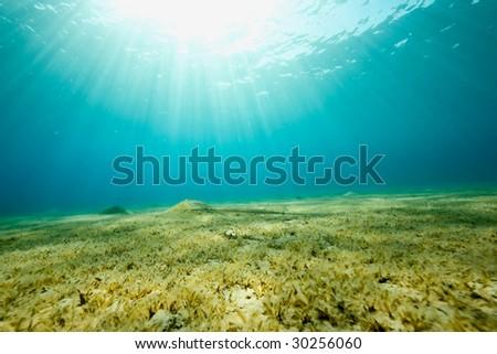 ocean, sun and sea grass - stock photo
