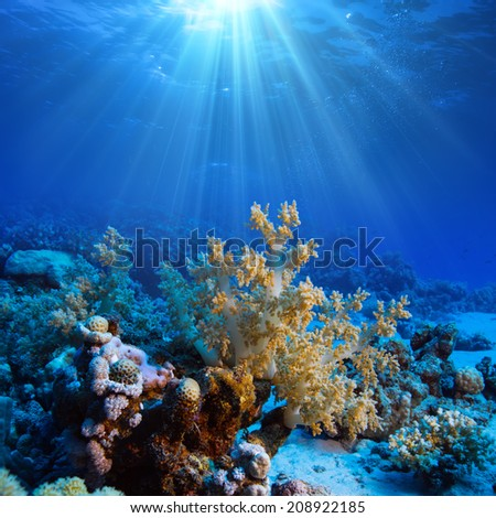 Ocean underwater coral reef in open deep sea - stock photo