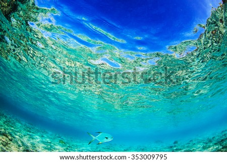 Ocean UnderWater surface with sandy bottom. Only fish in shallow water. Tropical Daylight through water. - stock photo