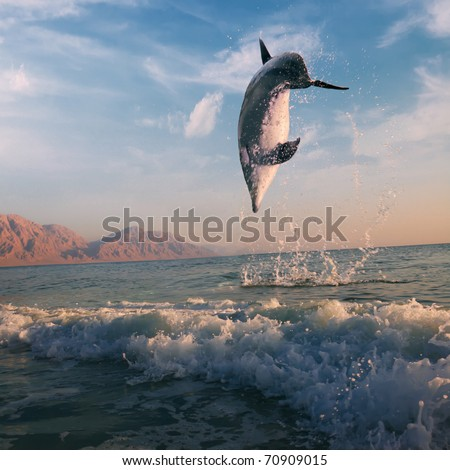 ocean-view beautiful dolphin jumped from water at the sunrise - stock photo