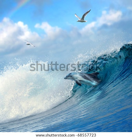 ocean-view playful dolphin leaping out from breaking ocean wave and seaguls flying on cloudy sky - stock photo