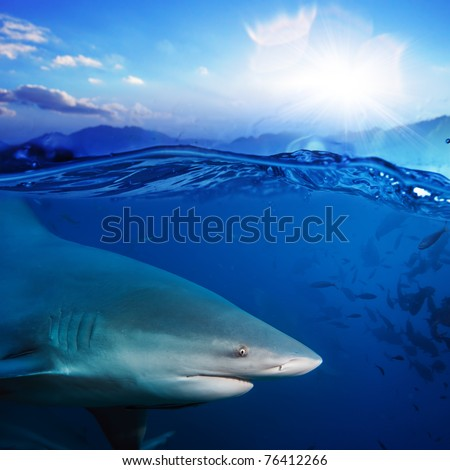 Ocean-view splitted two parts bottom is with bull-shark in blue underwater sunlight and sunset above - stock photo