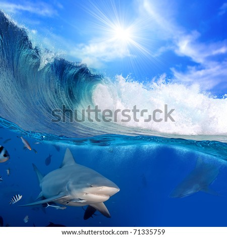 Ocean-view splitted two parts First with few bull-sharks in blue underwater Second with sunlight and cloudy sky splashed breaking surfing wave - stock photo