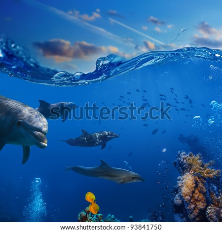 Oceanview. A flock of playful dolphins swimming underwater over coral reef background hunting to fish - stock photo