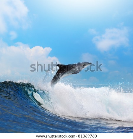 oceanview dolphin jumping from the sea through surfing wave - stock photo