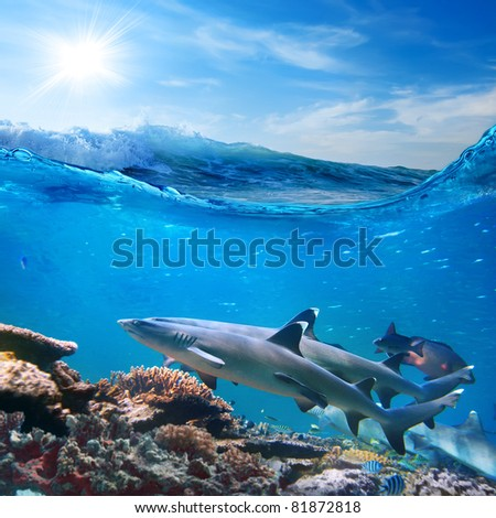 Oceanview sunlight and rough foamy waves in a shallow and two whitetip sharks swimming over coral reef - stock photo