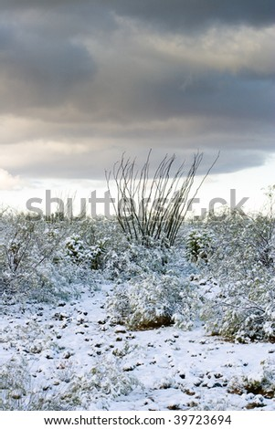 Ocotillo and cactus after snowstorm - stock photo