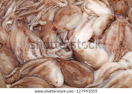 Octopus background - stock photo