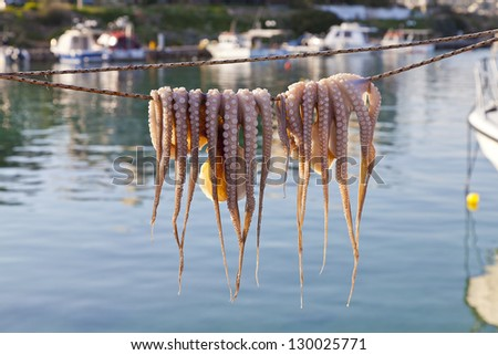 Octopus drying in the sun - stock photo