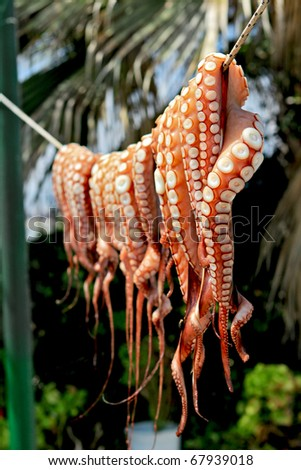 Octopus Drying on line - stock photo
