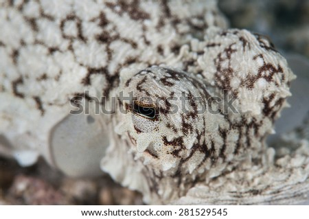 Octopus Eyes - stock photo