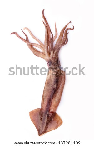 Octopus on white. - stock photo
