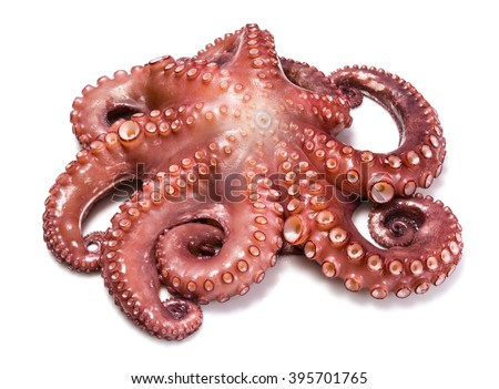 Octopus over white background - stock photo