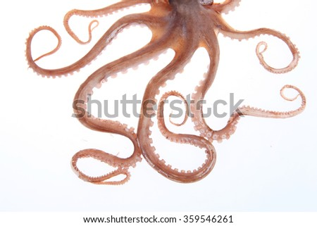 Octopus tentacles - stock photo