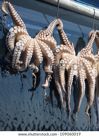 Octopuses hanging to dry outside restaurant in Greece. - stock photo