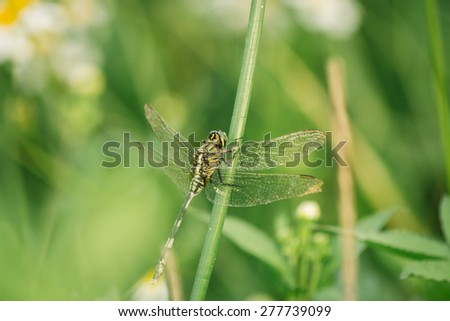 odo-nata/A green dragonfly holding on a tree branch in a forest. It is an insect belonging to the suborder Anisoptera.