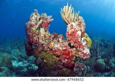 Off the coast of Roatan Honduras. coral gardens - stock photo