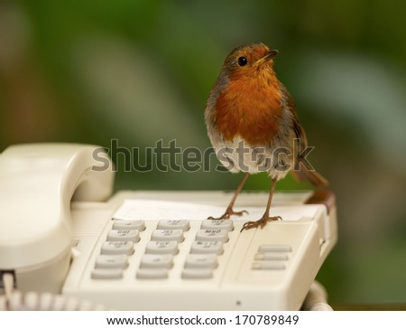 Office assistant. - stock photo