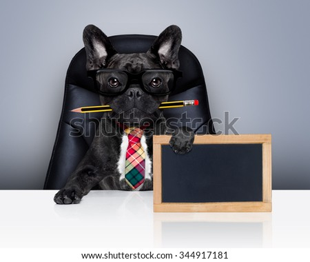 office businessman french bulldog dog with pen or pencil in mouth  , behind empty blank blackboard, sitting on a leather chair - stock photo