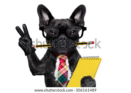office businessman french bulldog dog with pen or pencil in mouth holding a  notepad and   peace or victory fingers isolated on white background - stock photo