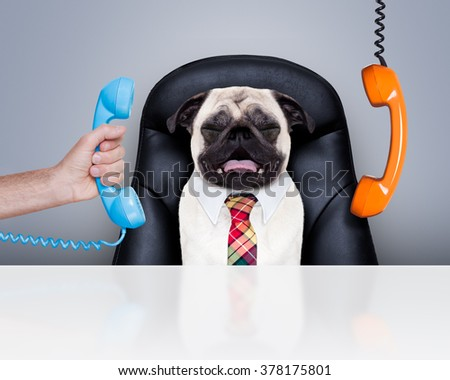 office businessman pug  dog  as  boss and chef , busy and burnout , sitting on leather chair and desk, telephones hanging around - stock photo