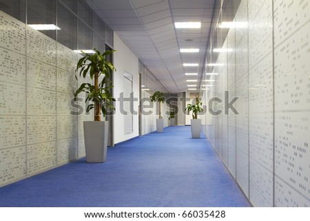 Office corridor with palm trees in pots, carpeting and glass walls