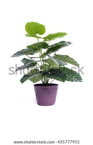 Office plant isolated on the white background - stock photo