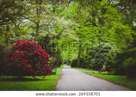 Ohlsdorf cemetery, Hamburg, Germany. Selective focus in the foreground. - stock photo