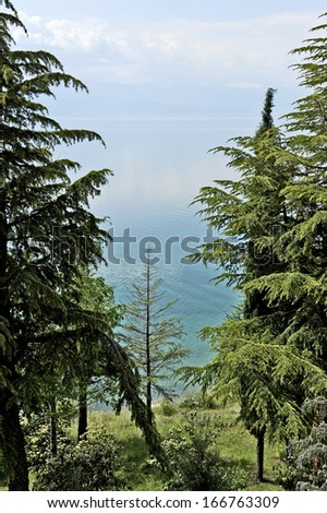 OHRID, MACEDONIA, MAY 18, 2011. Coniferous Trees in the shore of lake Ohrid.