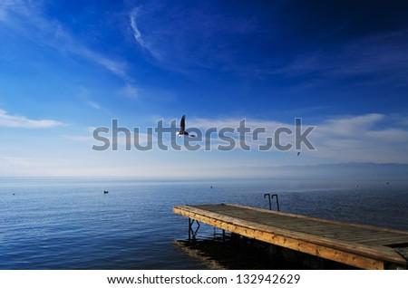 Ohrid's lake pier, seagull - stock photo