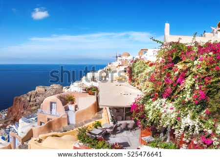 Oia village, Santorini island, Greece, with white and purple Bougainvillea plants, panoramic image