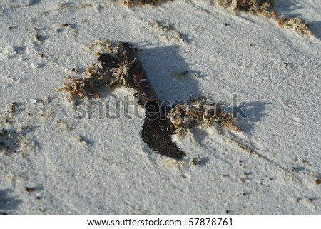 Oil leaking from pipe on Florida beach - stock photo