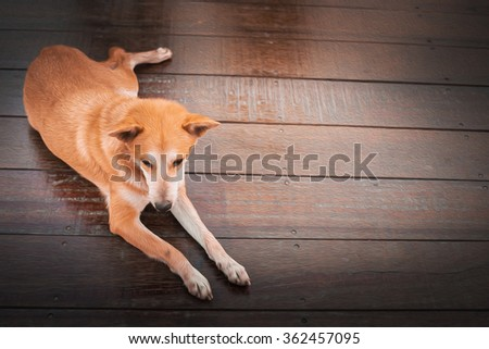 Oil Paint Picture of Lonely Abandon Dog on Wooden Floor in Sunset Time