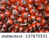 Oil Palm Fruit - stock photo