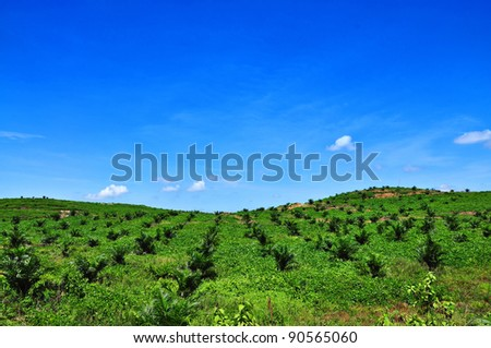 Oil palm plantation on the hill and blue sky - stock photo