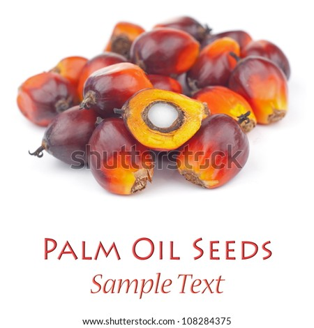 Oil Palm Seeds. Unsharpened file - stock photo