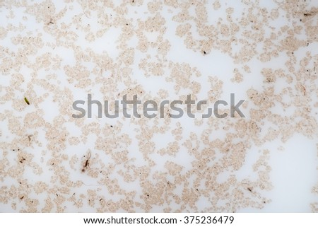 Oil stains on the water - stock photo