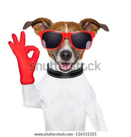ok fingers dog with red gloves and glasses