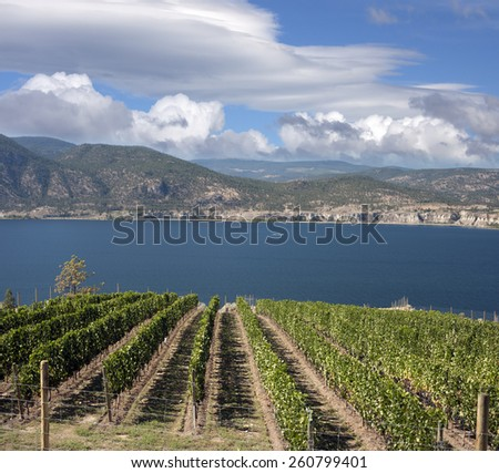 Okanagan Lake and vineyards, British Columbia, Canada