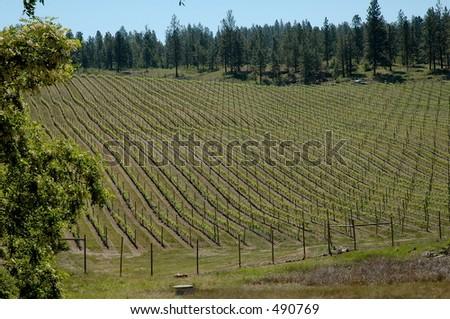 Okanagan Valley Winery - stock photo