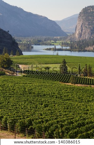 Okanagan Vineyard Scenic, British Columbia. Rolling hills of vineyards in front of of Vaseux Lake and the McIntyre Bluffs in the Okanagan Valley, British Columbia, Canada.  - stock photo
