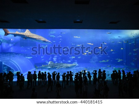 OKINAWA,JAPAN : DECEMBER 7 : Silhouettes of people and giant whale shark of fantasy underwater in Oceanarium on December 7,2015