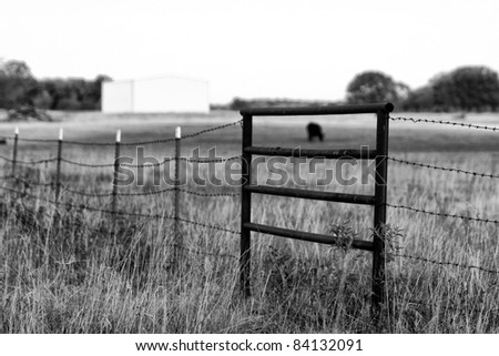 Oklahoma Cattle ranching in the summer - stock photo