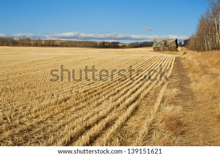 old abandoned barn in harvested field - stock photo