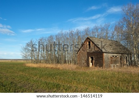 Old abandoned house with aspen trees behind and grass and weeds in front and a cultivated field in the foreground